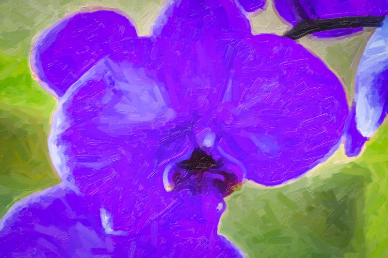 September 12 - Anniverwsary orchid.jpg