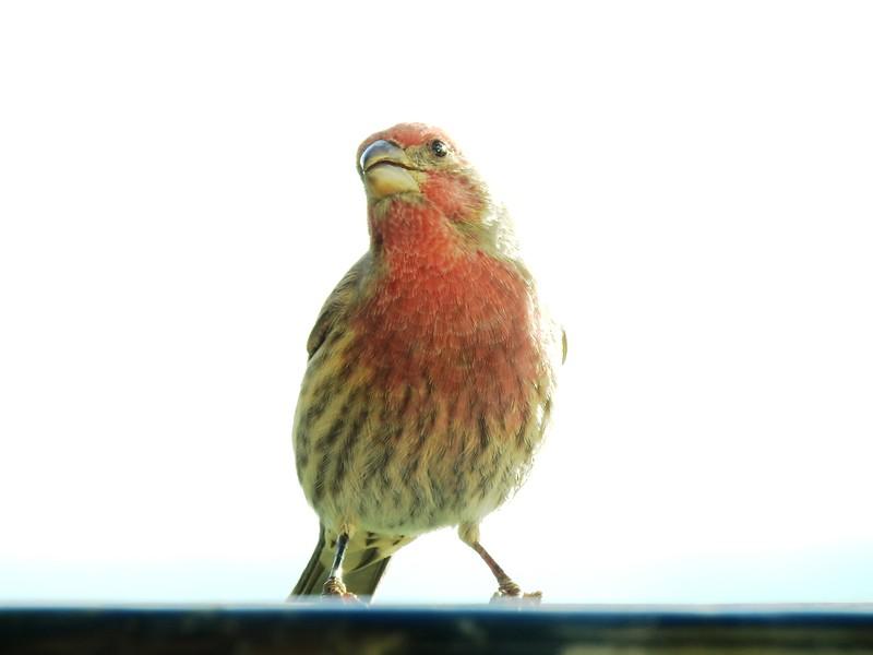 birds (127).JPG