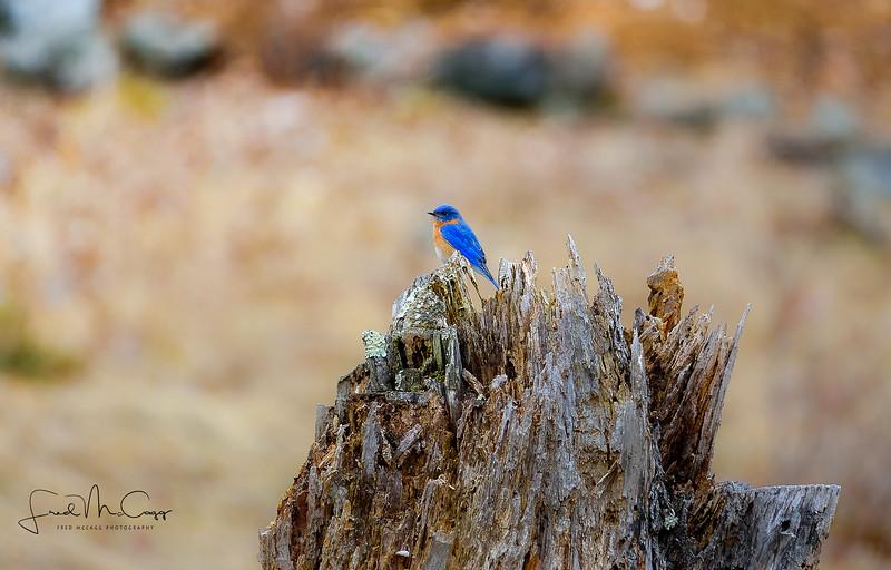 Rockwyk Bluebird.jpg