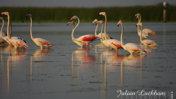 NalSarovar Bird Sanctuary, India