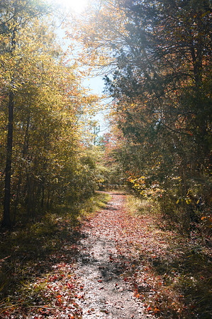 Laurel Springs and Tilghman Park