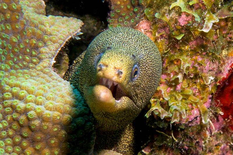 eel upclose bon18.jpg