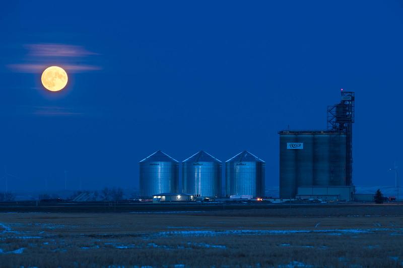 barley 39.jpg