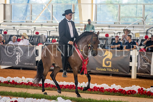 251-Fino Amateur Geldings 7 Years & Older