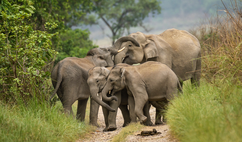 Play-time-elephants-corbett-1.jpg
