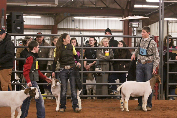 2015 Best of Collin County Livestock Show