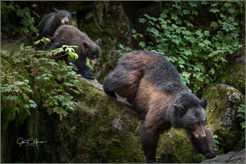 J85_6382 mom and cubs L W.jpg