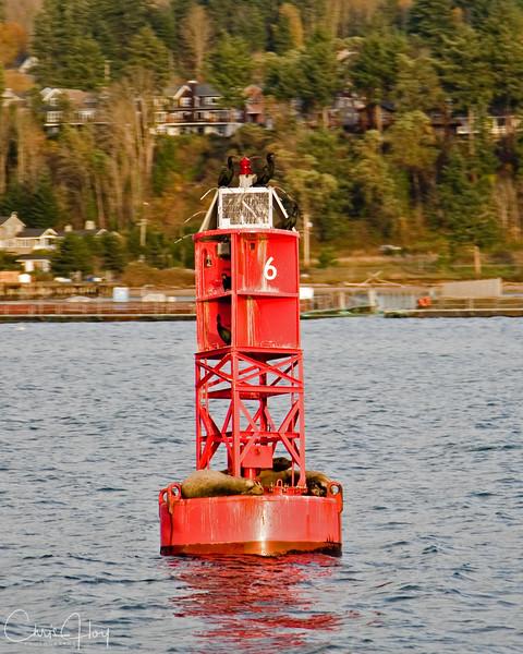 buoy 6.jpg