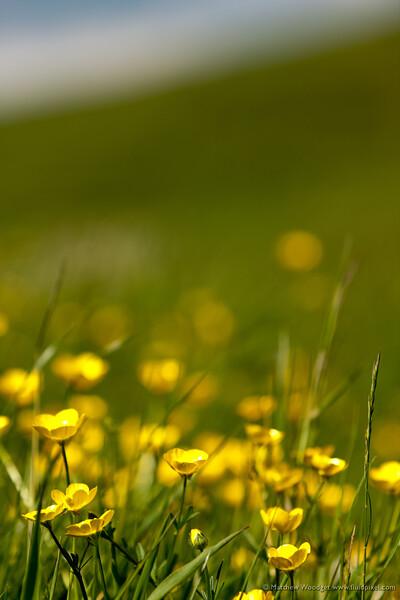 Eons of flowers