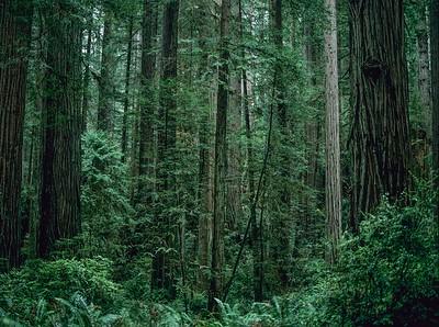 CA-Redwood National Park