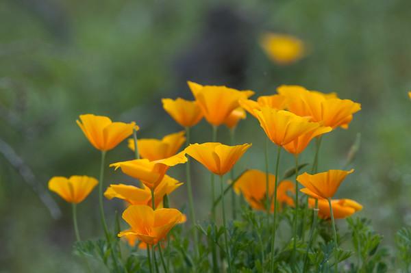 best flowers