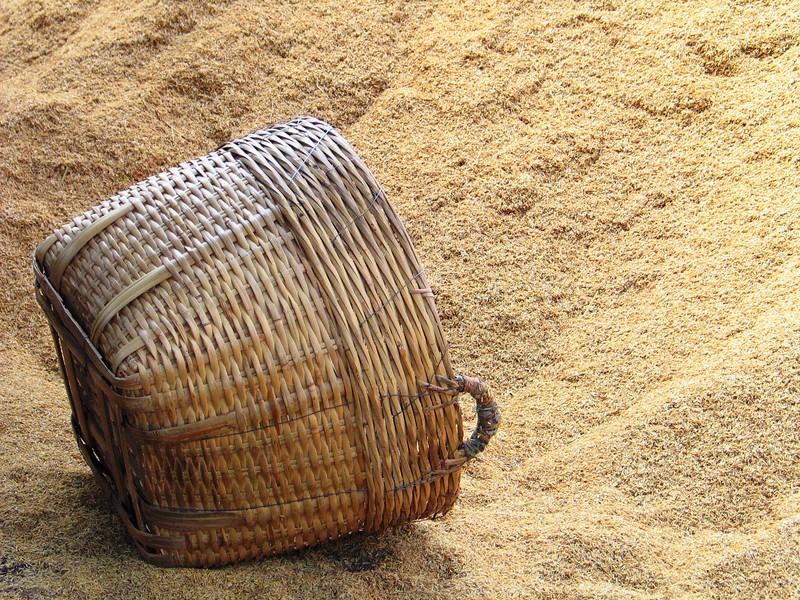 Rice Husks (1).jpg