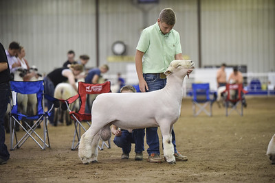 All American Jr. Sheep Show