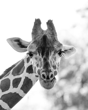 Zoo To Print