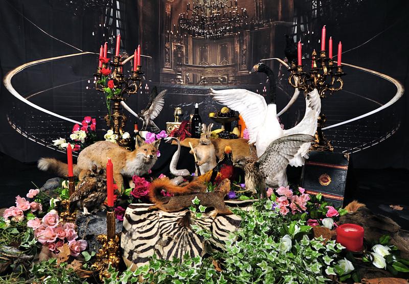 Animal Magic set.jpg