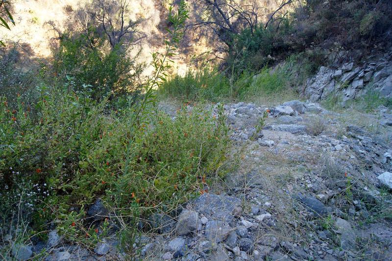 20110825001-El Prieto Trailwork Banner.JPG