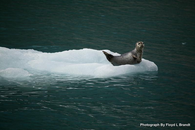 Alaska Kenai Fjords0084.JPG