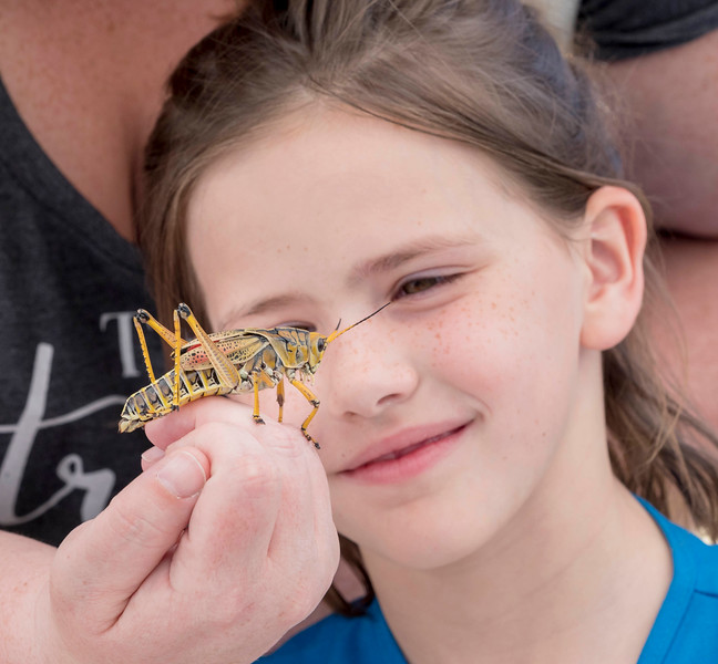 """Admiring a grasshopper  at the """"Wingding"""" family event"""