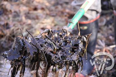 PILGRIM LAKE — herring run clean-up — Orleans, MA 3 . 26 - 2011