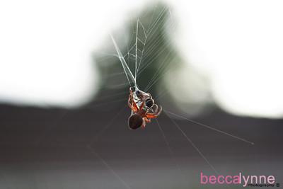november 21. 2008 the spider