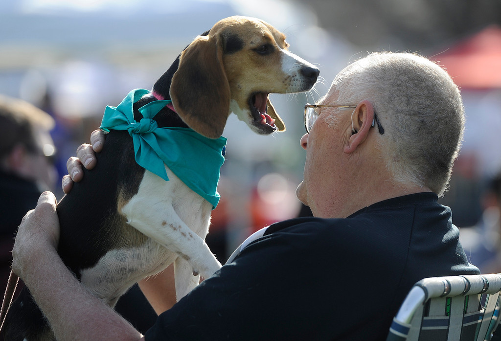 . DENVER, CO - MAY 4:  Ron Maslanik holds his beagle, �Sasha� as she yawns in his face at the 20th annual Denver Dumb Friends League fundraiser, �Furry Scurry,� at Washington Park, Saturday, May 4, 2013. Over 12,000 people and 5000 dogs participated in the two-mile walk around the park and enjoyed refreshments, contests, demonstrations and many pet-related sponsors and vendors. (Photo By Andy Cross/The Denver Post)