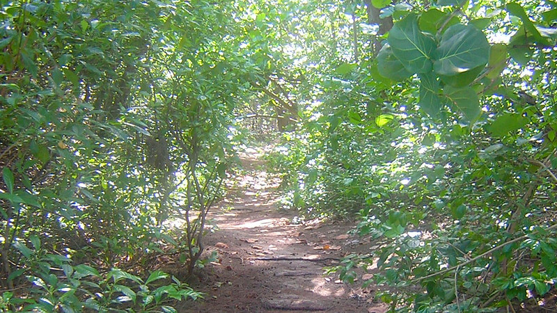 Beach Hammock Trail Hugh Taylor Birch
