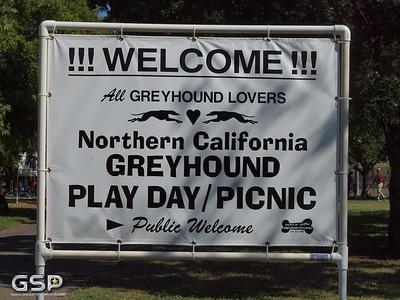 2015 Greyhound Play Day