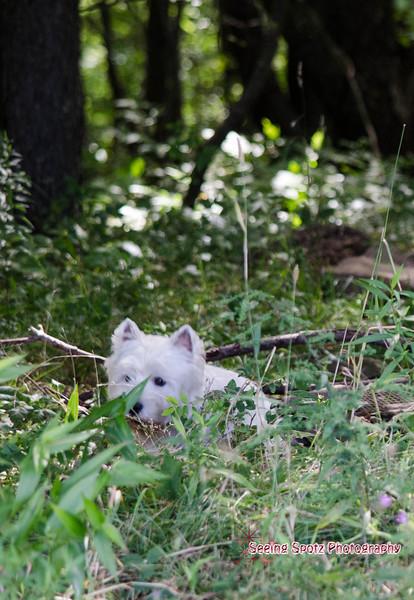 Earth Dog Trial 8-17-13
