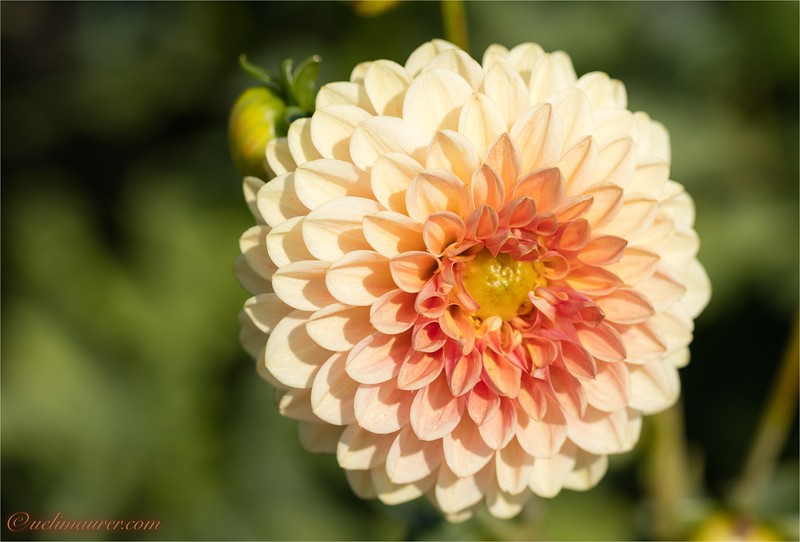 Blumen zum Selberschneiden - 2015-08-13- 0U5A1474.jpg