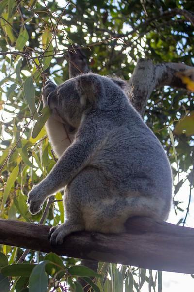 Australia_299.jpg