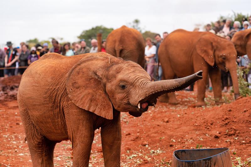 2019-08 Maasai Mara Elephants