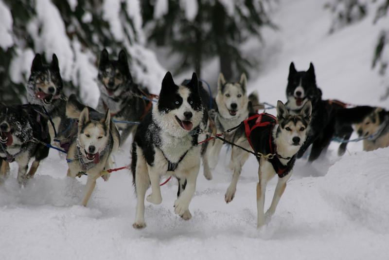 Conconully Dogsled Race Jan 2008 Card 1 366.jpg
