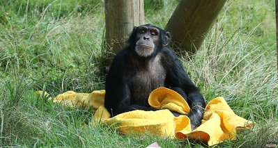 MonkeyWorld, 17 Sep 2016