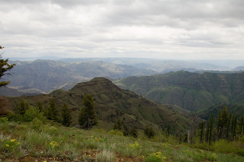 Looking out into the canyon area from the ridge.  The overcast made for better picture lighting than my solo run two days prior.
