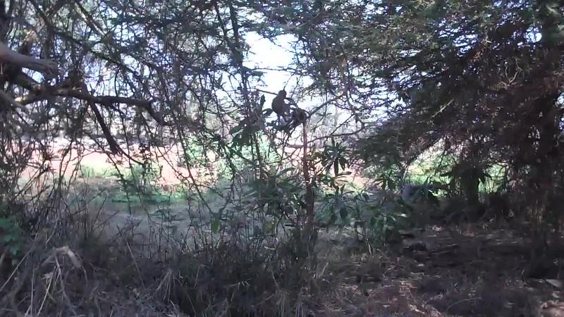 Video 76.MP4