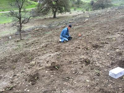 Planting plugs  & seeds 2/10/14