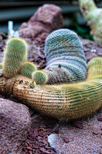 Nursing Cacti?