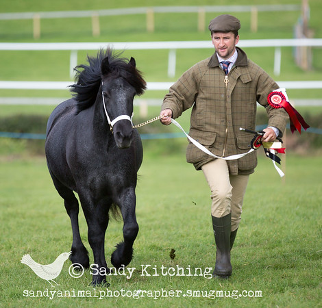 Witherslack Horse Show 2015