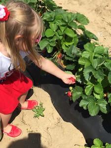 Strawberry Picking & Playground Fun