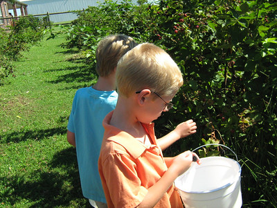 Blackberry Picking