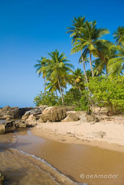 """Tropical Paradise"" _DSC0130aeamador©-DorMon1"