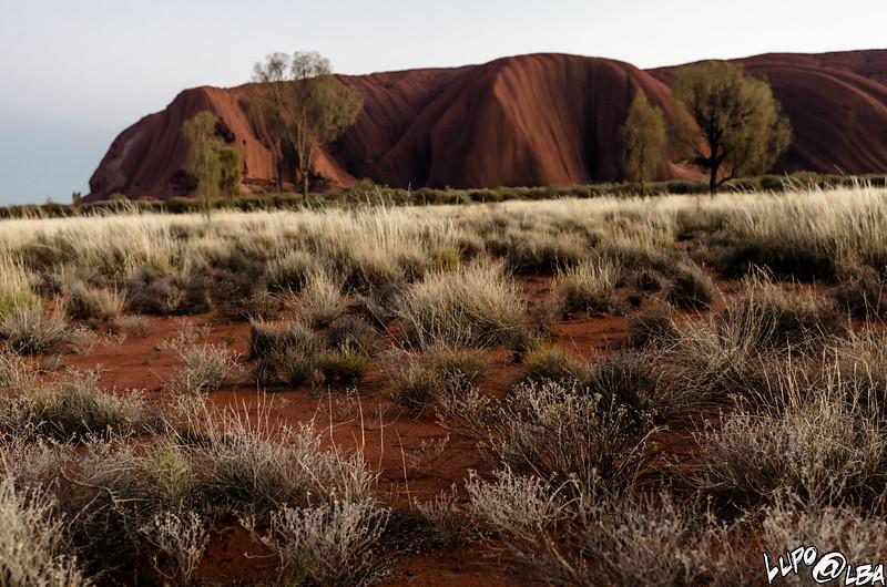 Australia-512.jpg