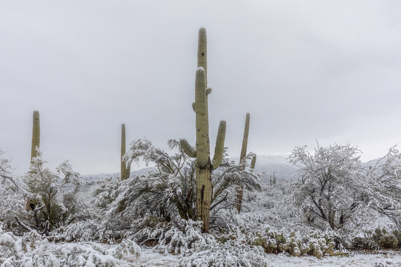 Saguaro East Snow 1-2-2019a 1-2-2019k-.jpg