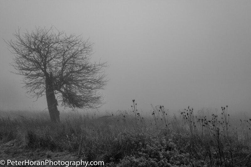 ghost-trees--106-of-11_31965078427_o.jpg