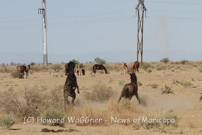Wild Horses 5-12-2014