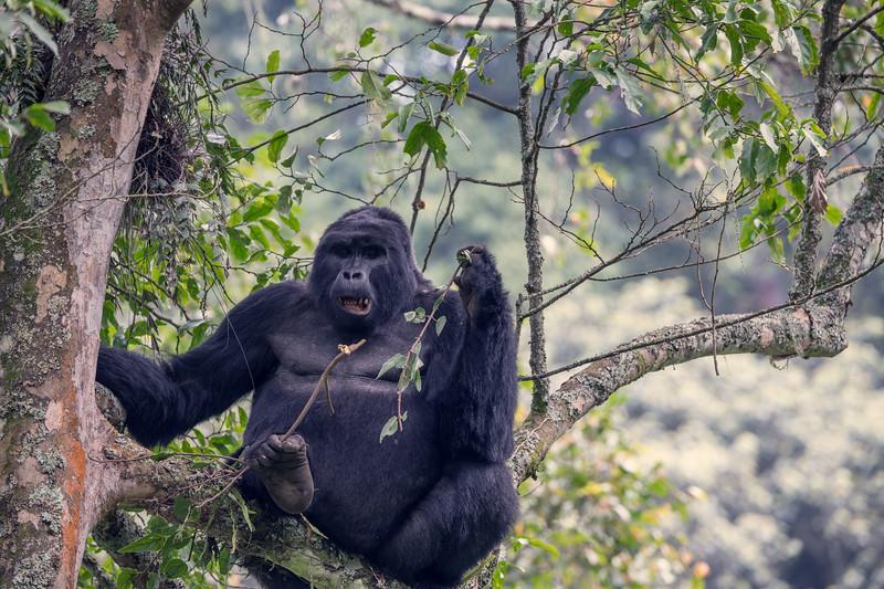 Uganda_T_Gor-2608.jpg