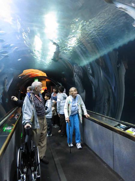 Aquarium Pier 13