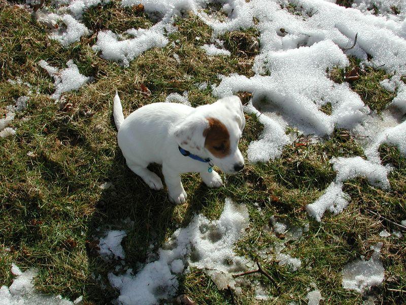 Feb 05- Puppies 026.jpg