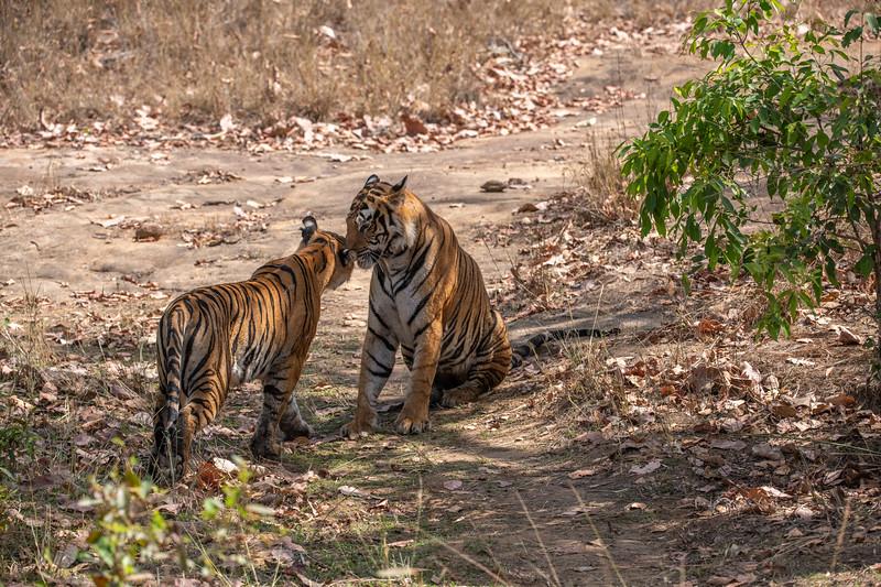 India_April_2019-873.jpg