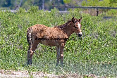 Milly Sue's Filly